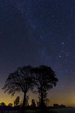 Trees in front of starry sky, milky way, Lower Saxony, Germany