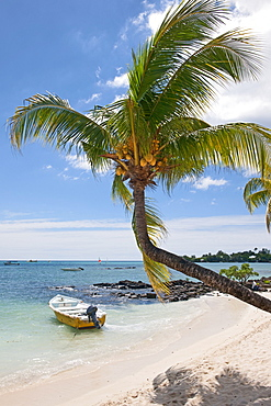 boat and palmtree, Pereybere, Mauritius, Africa, Indian Ocean / Pereybere