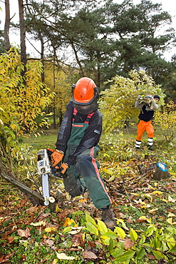 man, work, chainsaw, chain saw, protective clothing, helmet