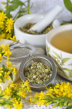 Goldenrod tea / (Solidago virgaurea)