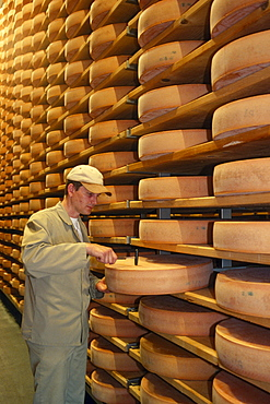 Man at work, shelf with cheese in dairy, Lingenau, Austria