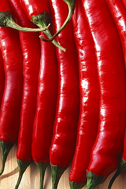 Hot Chilis / (Capsicum frutescens) / Cayenne, Chili Pepper, Tabasco Pepper