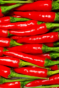 Chilis / (Capsicum frutescens) / Hot Chili, Piri-Piri, Chilli pepper