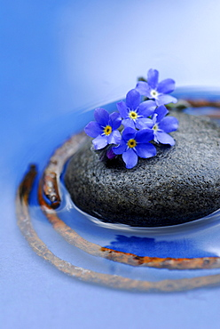Forget-me-not, stone and rusty metal ring / Forgetmenot