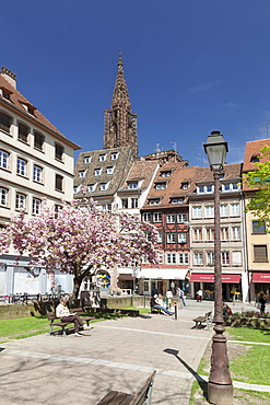 Place des Tripiers and Strasbourg Cathedral Notre Dame, UNESCO World Heritage Site, Strasbourg, Alsace, France, Europe