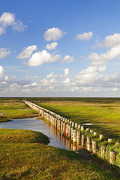 Salt meadow (salt marshes), Westerhever, Wadden Sea National Park, Eiderstedt Peninsula, Schleswig Holstein, Germany, Europe