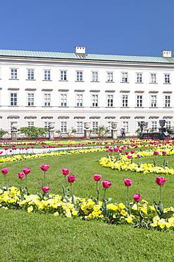 Tulips in Mirabell Garden, Mirabell Palace, UNESCO World Heritage Site, Salzburg, Salzburger Land, Austria, Europe