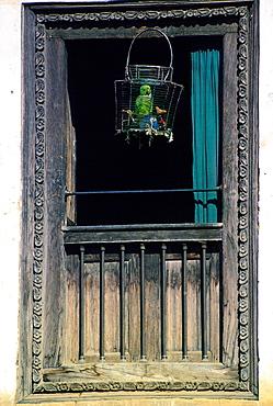 Caged parrot in window, Patan, Nepal. Avian flu (Bird flu virus) might affect caged birds.