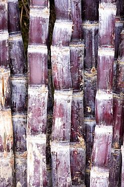 Sugar canes, Guilin, China