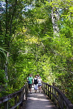 Tourists on the Big Cypress Bend boardwalk at Fakahatchee Strand, the Everglades, Florida, United States of America