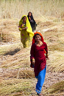 Indian women agricultural workers at farm at Sawai Madhopur near Ranthambore in Rajasthan, Northern India