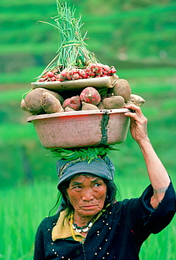 A woman from Ifugao carrying vegetables on her head on her way through the rice terraces  to the market at Banaue on the Island of Luzon in the Philippines