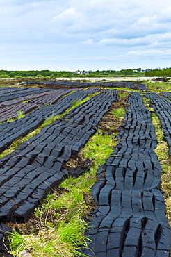 Turf cut by machine laid out to dry at Mountrivers peat bog, County Clare, West of Ireland
