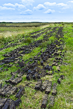 Turf laid out to dry at Mountrivers peat bog, County Clare, West of Ireland