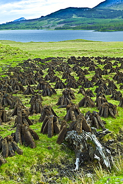 Stacks of turf, in a process called footing, drying on peat bog, by Lough Inagh, Connemara, County Galway, Ireland