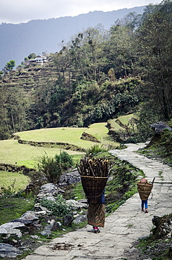 A woman and daughter carry firewood in dolkas back home to Ghandruk, Nepal, Asia