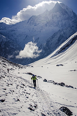 A hiker ascends the Modi Khola Valley to reach Annapurna Base Camp, 4130m, with Machhapuchhare, 6993m, in the background, Annapurna Conservation Area, Nepal, Himalayas, Asia