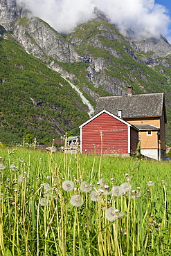 House and field with dandelions, backed by mountains, Eidfjord, Hardangerfjord, Norway, Scandinavia, Europe