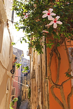 Narrow street and hibiscus flowers, Old Town, Corfu Town, UNESCO World Heritage Site, Corfu, Ionian Islands, Greek Islands, Greece, Europe