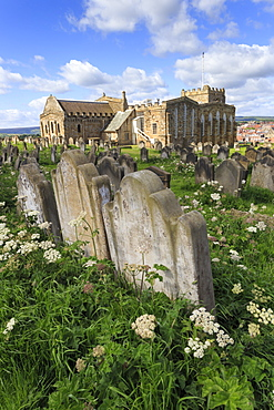 St. Mary's Church, gravestones in churchyard surrounded by cow parsely flowers in spring, Whitby, North Yorkshire, England, United Kingdom, Europe