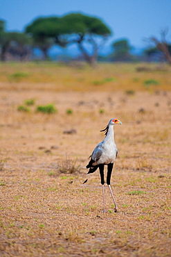 Bird at Amboseli National Park, Kenya