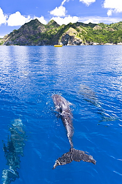 Dolphins, Bonin Islands