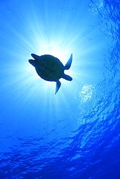 Underwater Life - 1172-2575