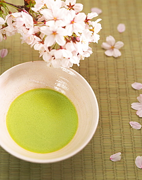 Cherry Blossoms And Japanese Tea