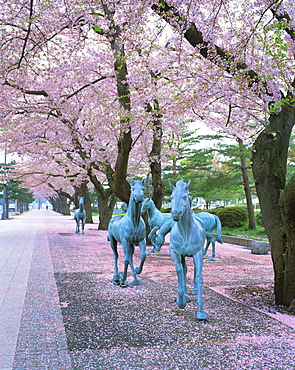 Sakura, Towada, Aomori Prefecture, Japan