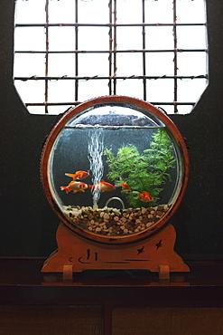 Goldfish in Japanese Interior