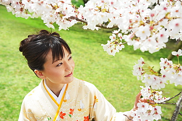 Japanese Woman Smiling Looking At Cherry Blossoms