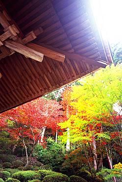 Mt. Hiei and Enryaku-ji, Kyoto, Japan