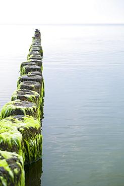 Algae-covered breakers in the Baltic Sea near Bansin, Usedom