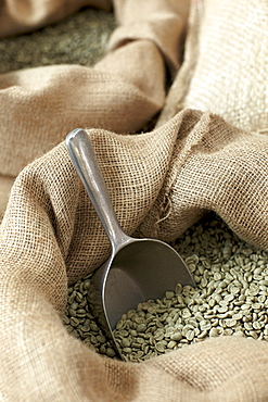 Close-up of raw coffee beans in sack with scoop
