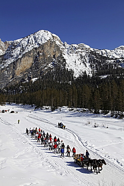 View of team of skiers hauling horses with long rope in ski area, South Tyrol, Italy