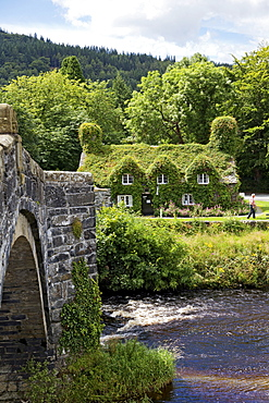 Welsh house covered with creepers plants near Conwy river at Llanrwst, Wales, UK