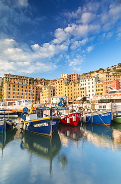 Sunset frames harbour and fishing village Camogli, Gulf of Paradise, Portofino National Park, Genoa province, Liguria, Italy, Europe