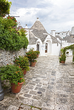 The typical Trulli built with dry stone with a conical roof, Alberobello, UNESCO World Heritage Site, Province of Bari, Apulia, Italy, Europe
