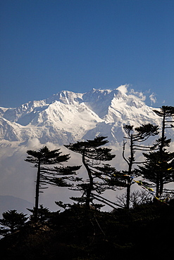 View of the icy summit of Kanchenjunga, partially hidden by pines adapted to the altitude near Sandakphu in West Bengal, India, Asia