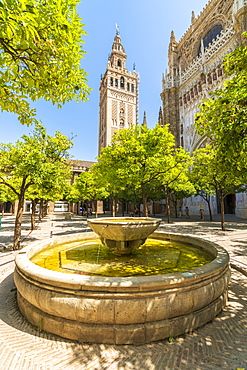 The gothic baroque Giralda belfry of Seville Cathedral, seen from Patio De Los Naranjos, UNESCO World Heritage Site, Seville, Andalusia, Spain, Europe
