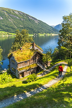 Tourist man on footpath in the old Astruptunet farms complex, Jolster, Sunnfjord, Sogn og Fjordane county, Norway, Scandinavia, Europe