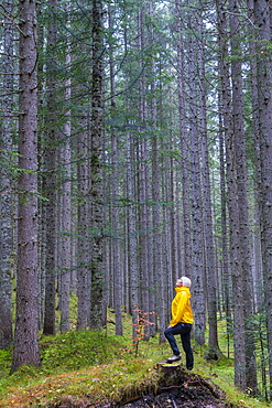 Woman standing in the forest looking up at tall trees, Somadida Nature Reserve, Dolomites, Auronzo di Cadore, Veneto, Italy, Europe