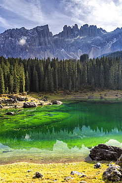 Latemar group reflected in the green waters of Lake Carezza, Ega Valley, South Tyrol Trentino-Alto Adige, Dolomites, Italy, Europe