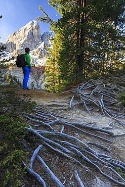 Hiker in the woods admires Sass De Putia, Passo delle Erbe, Puez Odle, South Tyrol, Dolomites, Italy, Europe
