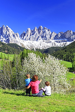 Family on green meadow admires the flowering trees at the foot of Odle, Funes Valley, South Tyrol, Dolomites, Italy, Europe