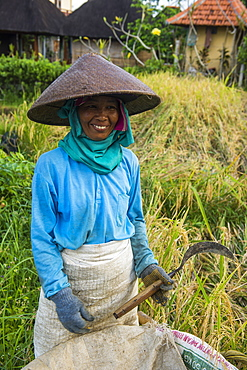 Local woman working in the rice paddies, Ubud, Bali, Indonesia, Southeast Asia, Asia