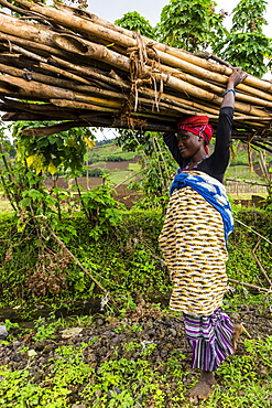 Woman carrying firewood on her head, Virunga National Park, Democratic Republic of the Congo, Africa