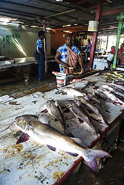 Fresh fish for sale in the Stabroek market, Georgetown, Guyana, South America