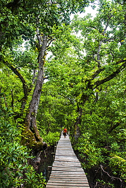 Long pier over a swamp, Kosrae, Federated States of Micronesia, South Pacific