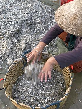 Vietnam, fishing co-operative working near mui ne